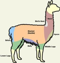 alpaca sketch - to determine how best to pick out the type of fleece you want!  SO USEFUL!