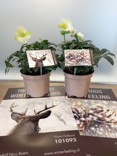 Global specialist in horticulture Design Packaging, Horticulture, Flyers, Planter Pots, Place Card Holders, Colour, Tags, Plants, Package Design
