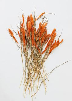 Dried Setaria Grass in Orange Simple Wedding Centerpieces, Fall Wedding Bouquets, Flower Centerpieces, Wedding Flowers, Wedding Decorations, Wedding Ideas, Burnt Orange Weddings, Dried Oranges, Pampas Grass