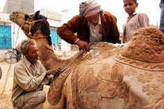 Clipping Camel's Hair - a lot of work to do! (India)