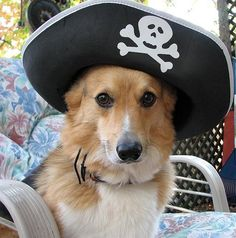 His face is WAY too sweet to be a pirate!