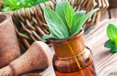 Les 15 meilleures plantes médicinales