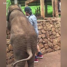 Funniest Compilation Of Funny Animals 😁 - Lustige Tiere - Animals Funny Dog Videos, Funny Animal Memes, Funny Animal Pictures, Cute Funny Animals, Cute Baby Animals, Funny Cute, Funny Dogs, Cute Dogs, Wild Animals