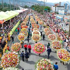 In Santa Elena, Medellín, Colombia once a year the Feria de las Flores - Flower Festival takes place. In August this amazing party with shows, millions of flowers, music and food starts again! Visit Colombia, Colombia Travel, The Beautiful Country, Beautiful Places In The World, Tahiti, Belize, Latin Travel, Puerto Rico, Carnival