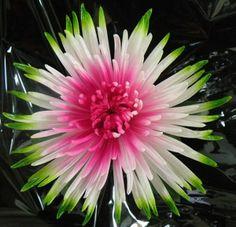 fuji mums flowers | Fuji Anastasia Painted Trio