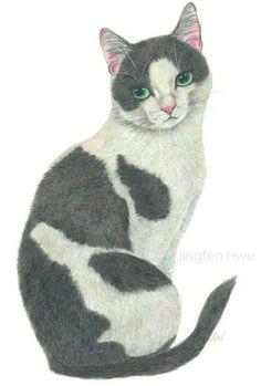 An Elegant Tuxedo Cat   watercolor pencil drawing , cat art, tuxedo cat painting #jingfenhwu