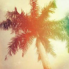 A palm tree painting wall decoration #photography #photo #print #canvas