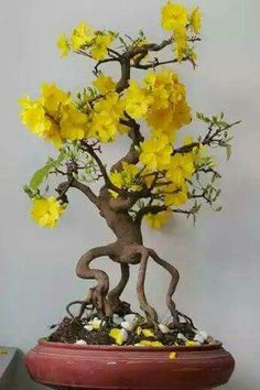 Root exposed bonsai is now a trend.