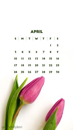 April 2016 Calendar Wallpaper Free Download for mobile, iphone and android, simple white and tulip flower background on the blog!