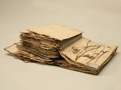 Pressed Botanicals from a French Monastery School | From a unique collection of antique and modern books at https://www.1stdibs.com/furniture/more-furniture-collectibles/books/