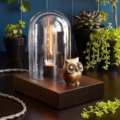 Shed some light on the subject with this vintage-inspired lamp featuring a watchful brass owl.