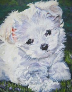 Looks just like little Mia!! ---Maltese art print CANVAS print of LA Shepard by TheDogLover, $39.99