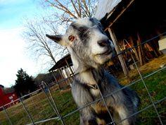 Bright Star Farm - Blog