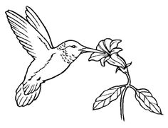 Bird And Flower Coloring Page