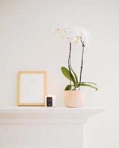 filling the house with the sweet scents of @shopgoodwin's ipanema candle   @jessicacomingre.