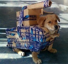 DOG TANK..Let's see if a burglar can get inside our house now