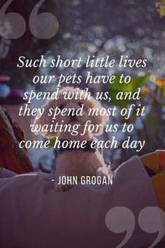 Our dogs are our best friends in the world without a doubt. Show your love and appreciation for these adorable doggos with these 21 inspiring dog quotes. John Grogan, Great Quotes, Inspirational Quotes, Jonathan Swift, Cesar Millan, Read Later, Quote Board, Bichon Frise, Unconditional Love