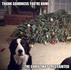 Thank Goodness You're Home…