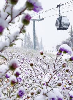 Going skiing in Aspen Snowmass? Book your next ski holiday to Aspen Snowmass and discover a top-class ski resort in the heart of Colorado! Aspen Ski Resort, Ski Packages, Aspen Snowmass, Go Skiing, Ski Holidays, Ski Lift, Rocky Mountains, Over The Years, North America