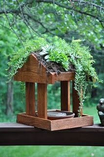 If I can't put a living roof on my house, I can at least give one to the birds!  Living Roof Bird-feeder...  rebeccasbirdgardens.com