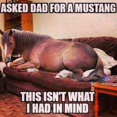 Ford Humor, Funny Horses, Horse Photos, Brighten Your Day, Kohls, Mustang, Funny Pictures, Nerd, Dads