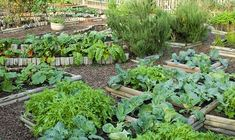 Incomparable Vegetable Gardening Tips At Your Backyard Ideas. Impressive Vegetable Gardening Tips At Your Backyard Ideas. Backyard Garden Design, Backyard Fences, Garden Fencing, Backyard Landscaping, Bamboo Fencing, Landscaping Ideas, Raised Vegetable Gardens, Vegetable Garden Design, Vegetable Gardening