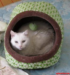 Scully Likes Her New To Her Mini Cat Hut. - http://cutecatshq.com/cats/scully-likes-her-new-to-her-mini-cat-hut/