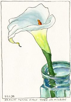 Ink Drawing Calla Lilly Ink and watercolor - After a weekend of making paintings, scraping the canvas and starting over (with nothing to show for it but some learning) I accidentally knocked a 12 oz latte off the table, splattering the studio… Watercolor Journal, Pen And Watercolor, Watercolour Painting, Watercolor Flowers, Painting & Drawing, Watercolors, Watercolor Portraits, Watercolor Landscape, Watercolor Artists