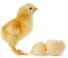 Hatching eggs activities