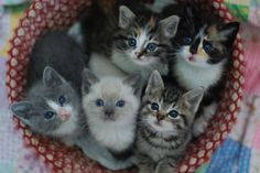 A basketful of kittens, including one that looks like my Bossy Boots (the gray and white one on the left).