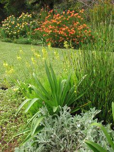Fynbos Garden Backyard Plantings Make Lush Border Around Farm Gardens, Outdoor Gardens, Farm Landscaping, National Botanical Gardens, African Plants, Small Garden Landscape, Full Sun Plants, Australian Plants, Coastal Gardens