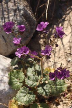 Death Valley National Park #FindYourPark