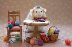 knitting hamster