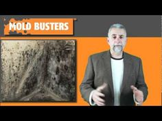 VIDEO   The mold removal experts discuss the dangers of black mold in your home. #blackmold #toxic #dangerous