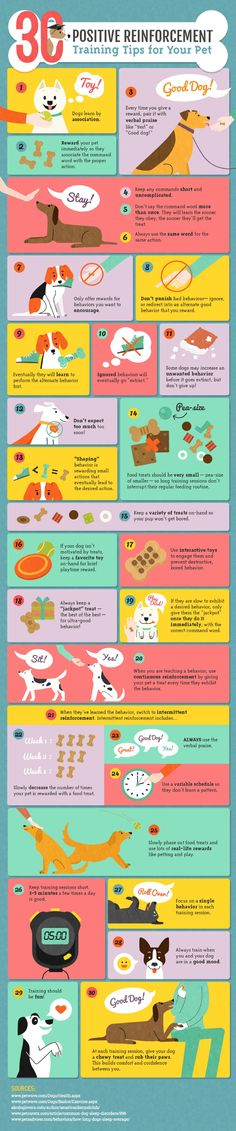 Pet Training - Pupy Training Treats - Positive Reinforcement Training for Dogs-Infographic by Amber Kingsley - How to train a puppy? This article help us to teach our dogs to bite just exactly the things that he needs to bite Puppies Tips, Puppies Stuff, Poodle Puppies, Rottweiler Puppies, Terrier Puppies, Pomsky, Positive Reinforcement, Scottish Fold, Dog Care Tips