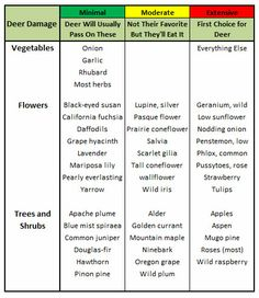 Great List Deer Resistant Plants | Outside Spaceu2026Landscaping And Projects |  Pinterest | Deer Resistant Plants, Plants And Gardens