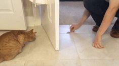 Löffelspiel mit der Katze