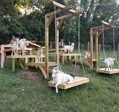 Goat shelter / jeux pour chèvres / toys for goats / abri chèvres Goat Playground, Goat Shed, Goat Shelter, Goat Barn, Raising Goats, Keeping Goats, Mini Farm, Goat Farming, Baby Goats