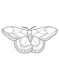 Mariposa de Seda de Rothschild Dibujo para colorear