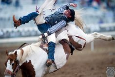 The largest three-day rodeo in the United States is held on the Tehama County Fairgrounds in Red Bluff.