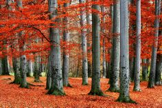Autumn is magical in the Northeast. Capture the crimson, gold and all hues in between with this forest. $49, Elementem Photography, 24x36 inches, canvas, Autumn, Fall, foliage, red, yellow, tree, leaves