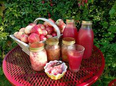 Ta vara på fallfrukten – recept och tips för äpplen