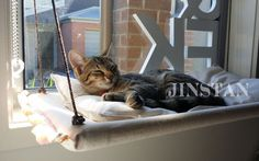 This post is for the Size (3) 70cm x 38cm x 3cm Comfortable Window Hammock Bed with cushion (with POM POM decorations!!) Give your cats⁄kittens the best and safe napping spot in the house to enjoy the view or just sleep under the Sun anythime!  Description - 100% Brand new and handmade to order - Excalty same design as shown in the photos and installed perfectly. - Made by PVC pipe, covered by fine fabric and supported by adjustable loop & hooks(can set up multiple sunny seats at different…