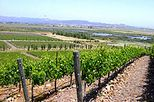 Customizable Wine Country Tour from San Francisco