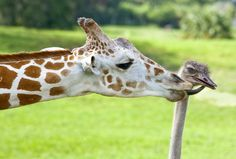 12 adorable animals to brighten up your Labor Day weekend