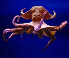 the body and head don't go well together Weird Sea Creatures, Fantasy Creatures, Mythical Creatures, Rare Animals, Animals And Pets, Funny Animals, Photoshopped Animals, Graphic Design Lessons, Animal Mashups