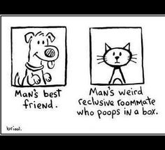 Why dogs are better than cats. Dog News. Cute dog photo. Mans best friend.