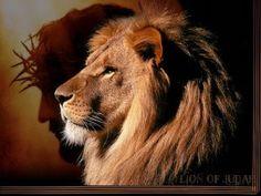 Lion of Judah Wallpaper