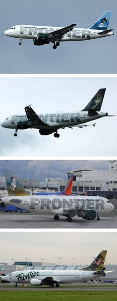 """Frontier Airlines, an airline based out of Denver, Colorado, have the company slogan """"A Whole Different Animal,"""" each of their planes depicts a different animal."""