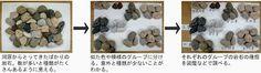 「石 自由研究 小学生」の画像検索結果